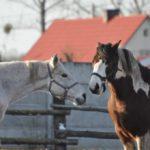 Końska zabawa