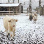Zimowe powroty