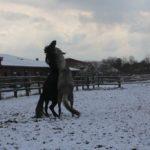 Zabawy koni.