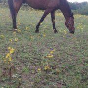 Pomoc dla koni