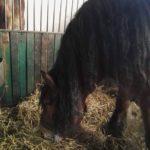 konie na klinice
