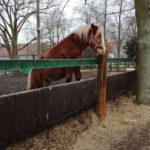 Zabawy konia