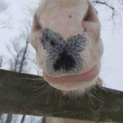 Jaki to koń