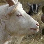 Tarowe zwierzaki
