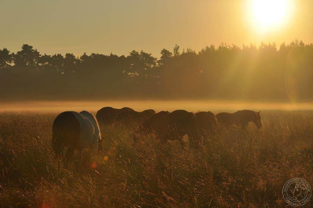 słońce i konie