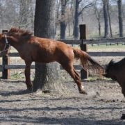 Latające konie
