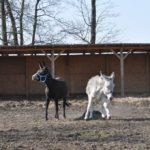 Zjednanie koni