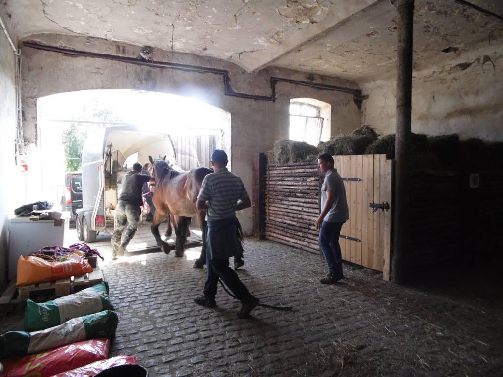 Załadunek koni
