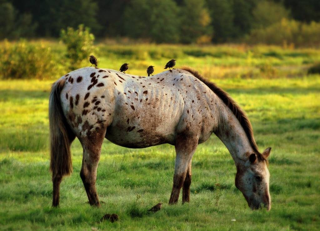 koń i ptaki