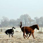 Konie na szronie