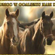 tęczowe konie