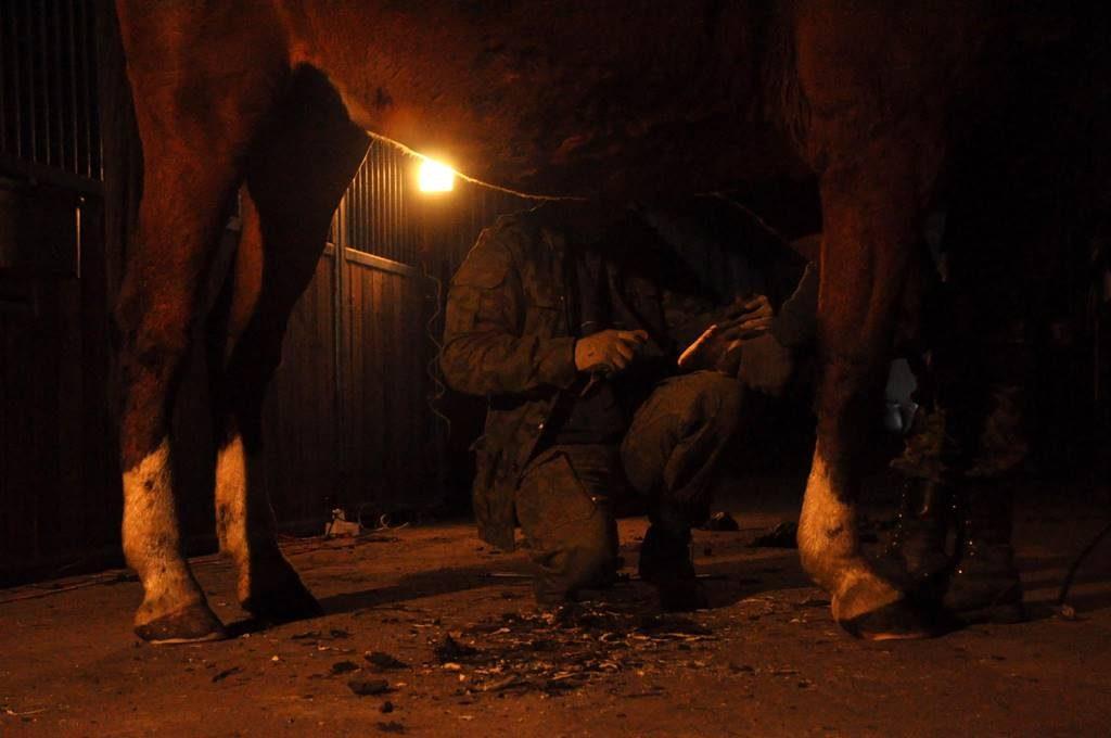 Werkowanie koni