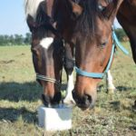 Woda dla koni