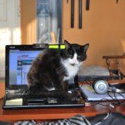 Biurowy kot.