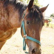 szukanie konia