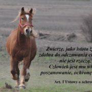 Galop konia