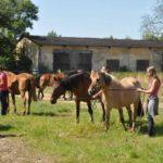 Wędrowna przeprowadzka koni.