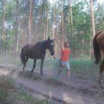 Przeprowadzka koni na ekologię>