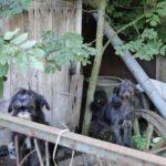 Poszukiwany dom dla psiaków.