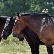 Koń i ptak.