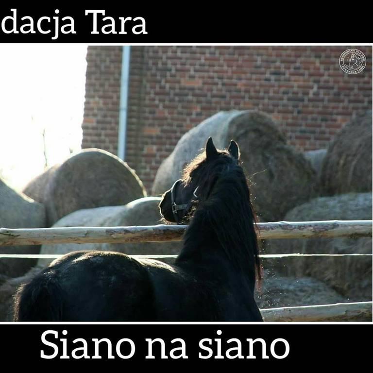 koń patrzący