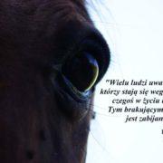 Oko konia