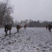 Pierwszy śnieg.