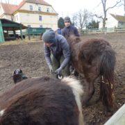 mężczyźni przy koniach