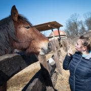 kobieta patrząca na konia
